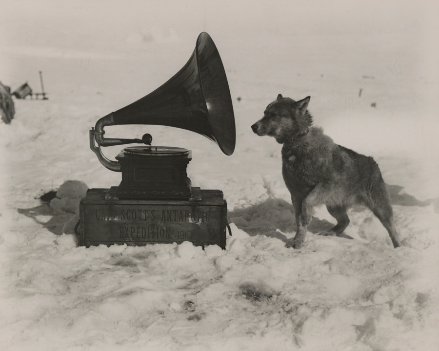 11 To entertain the men, Captain Robert Scott took a gramophone on his South Pole Expedition. Chris, one of his dogs, was apparently also a fan, September 1911