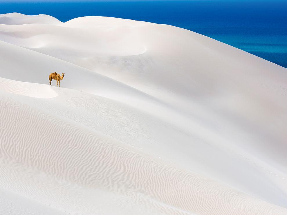 Oceano Indiano, Scotrand Island, Yemen,