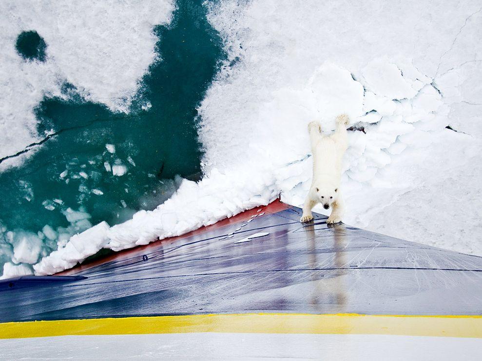 polar-bear-ship-norway_29420_990x742