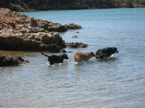 doggie-beach-caprera